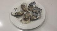 Freycinet Marine Farm Oysters
